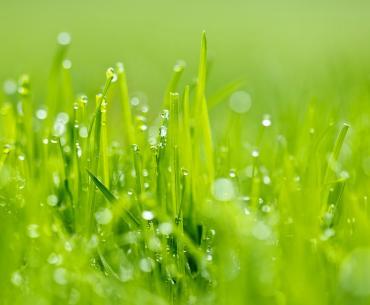 Посевной газон. Фото